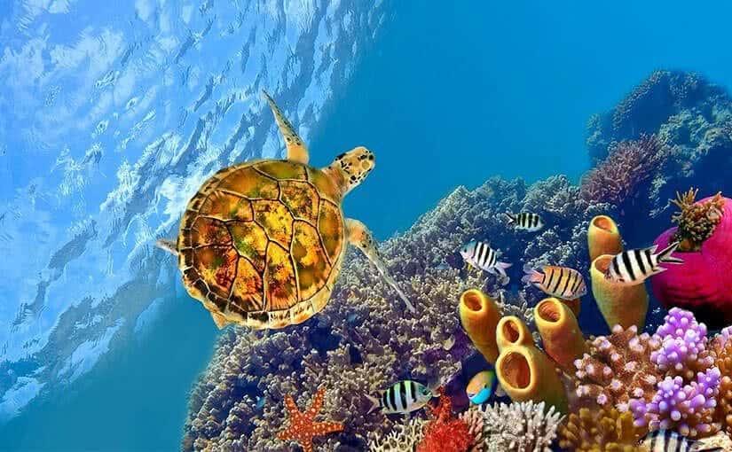 Sony: Aquarium