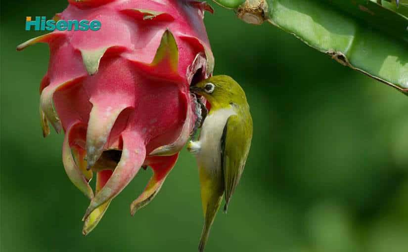 Hisense: Microcosmic Ecology