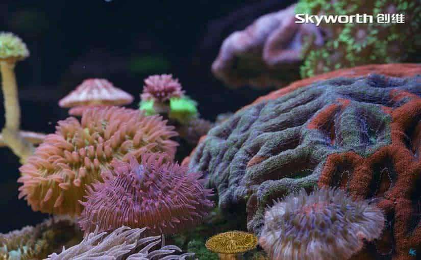 skyworth microscopic beauty