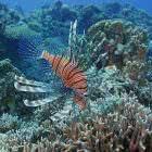 Sony: Beautiful Sea In Okinawa